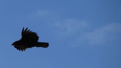 OSSERVARE  LA NATURA, FOTOGRAFARE LA NATURA • Re: Birdwatching dal balcone
