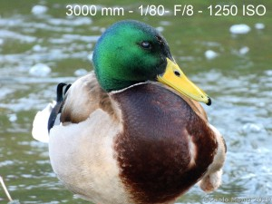 Nikon_P100000003
