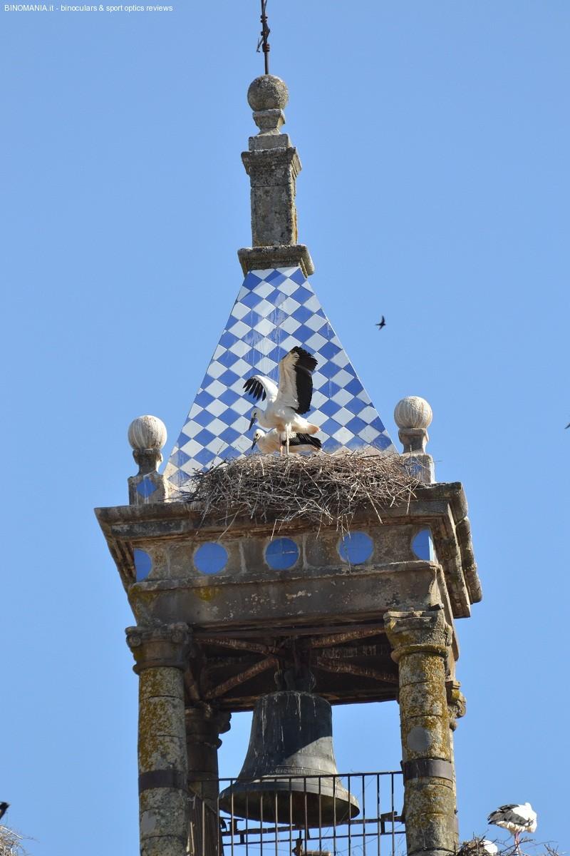 Le cicogne in Estremadura sono ovunque..