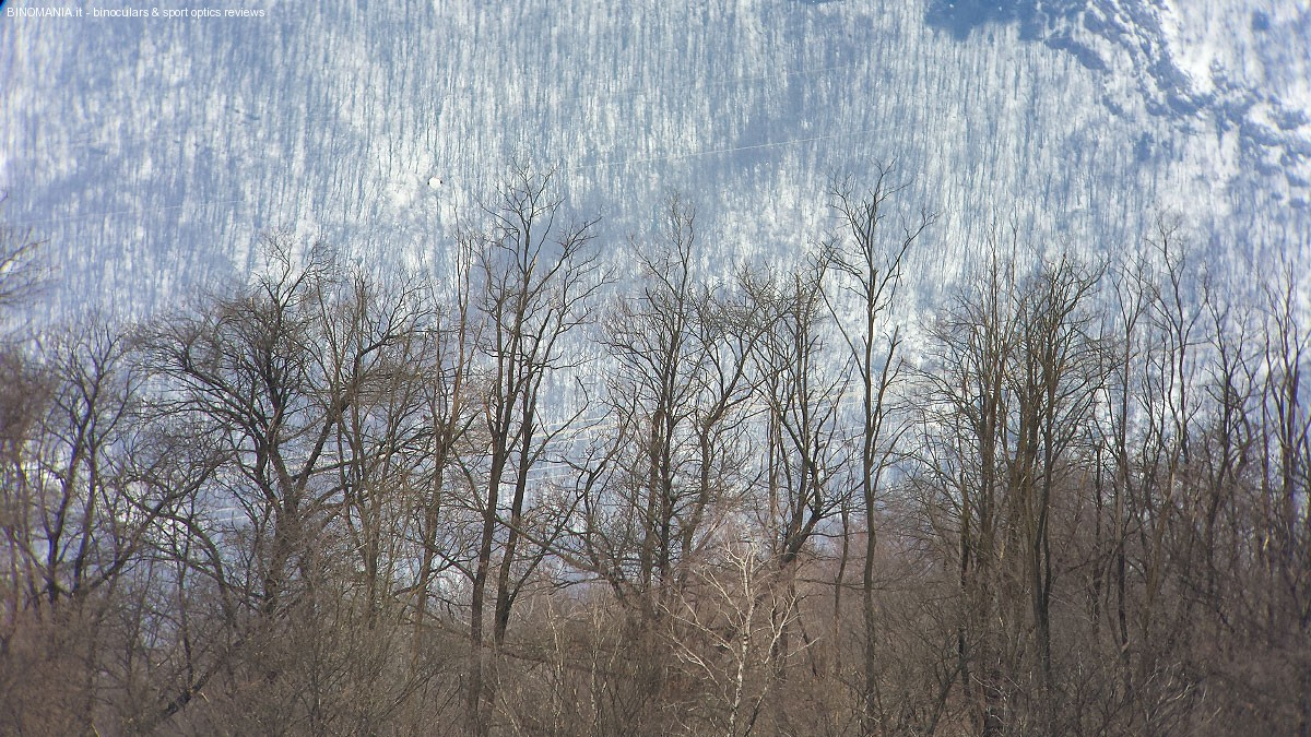 Degli alberi distanti 600 metri. Nikon 50 ED e Galaxy S4