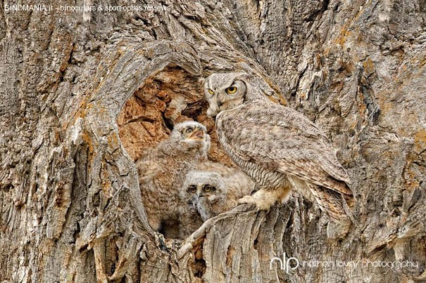 camouflaged-owls-6