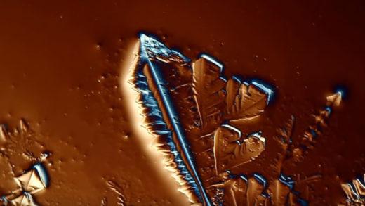microscopeitaly
