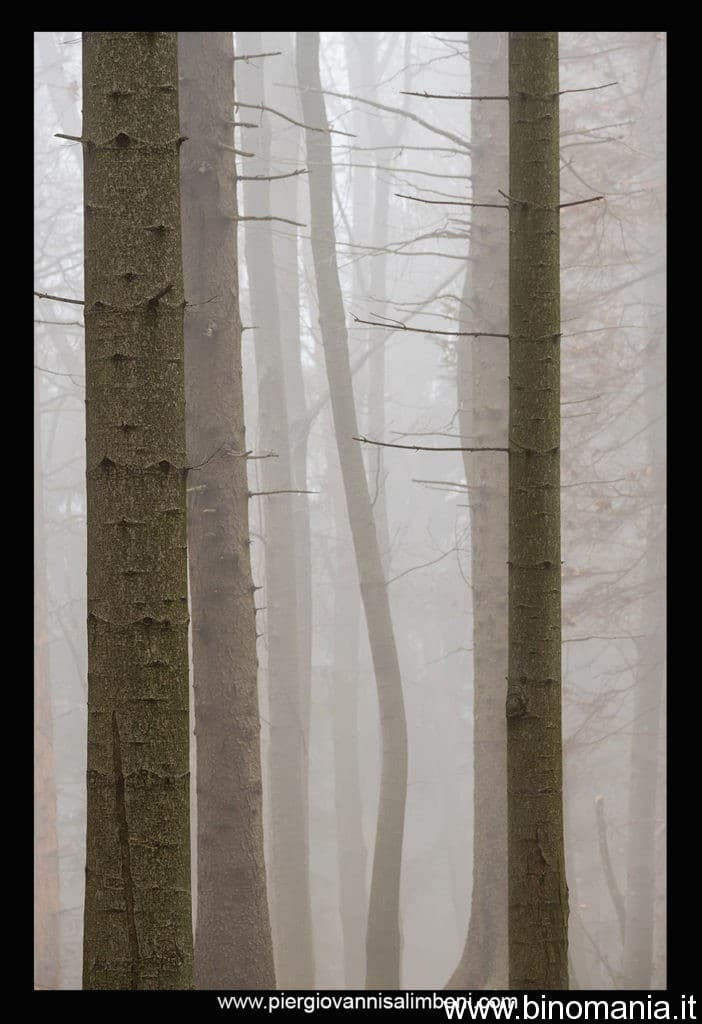Giochi di luce e nebbia nell'abetaia