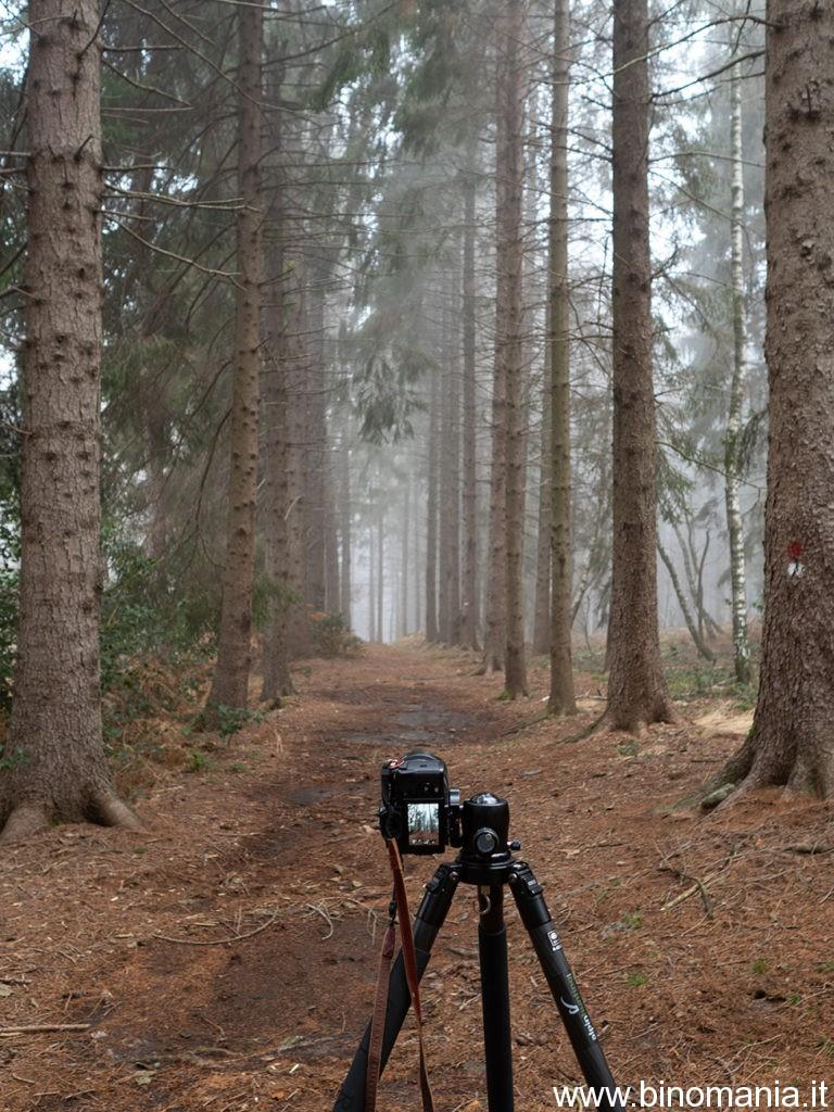 La Fujifilm X-T3 durante una sessione fotografica nell'abetaia del monte Sette Termini